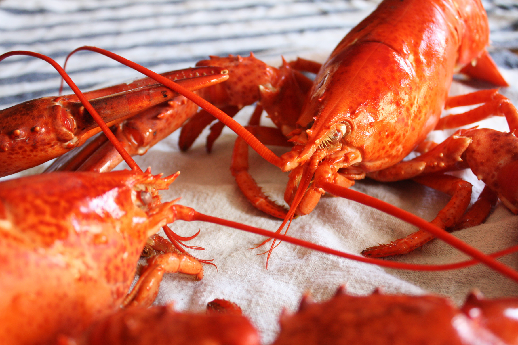 how to eat cooked lobster